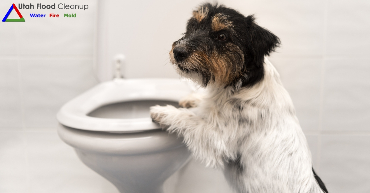 Dog and toilet - Things You Should NOT Flush Down the Toilet