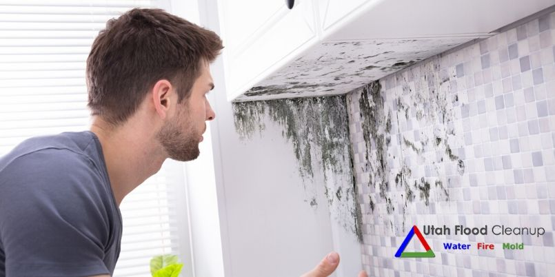 8 Places Mold Grows and What to Do About it - Mold Abatement Services in Utah - Utah Flood Cleanup