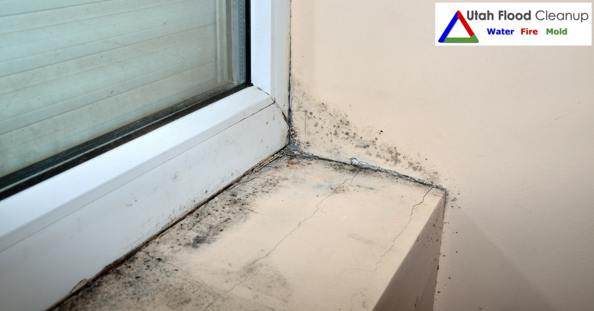 House Mold Dangers in Utah - Utah Flood Cleanup
