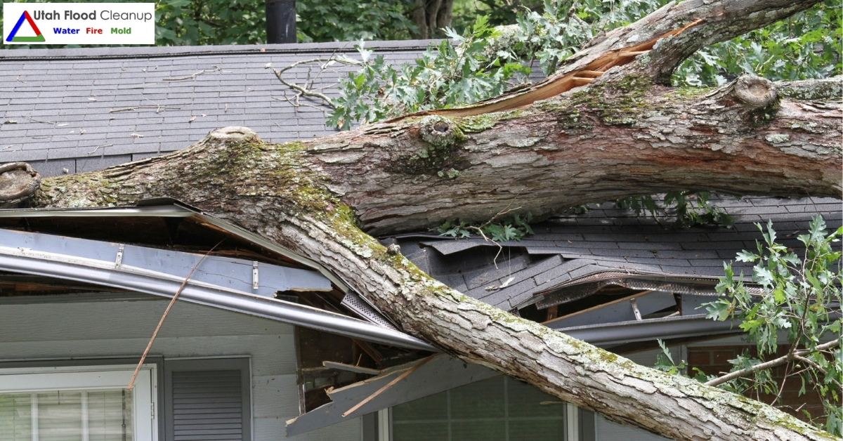 Tree Fallen on a House - Signs Your Tree is About to Fall