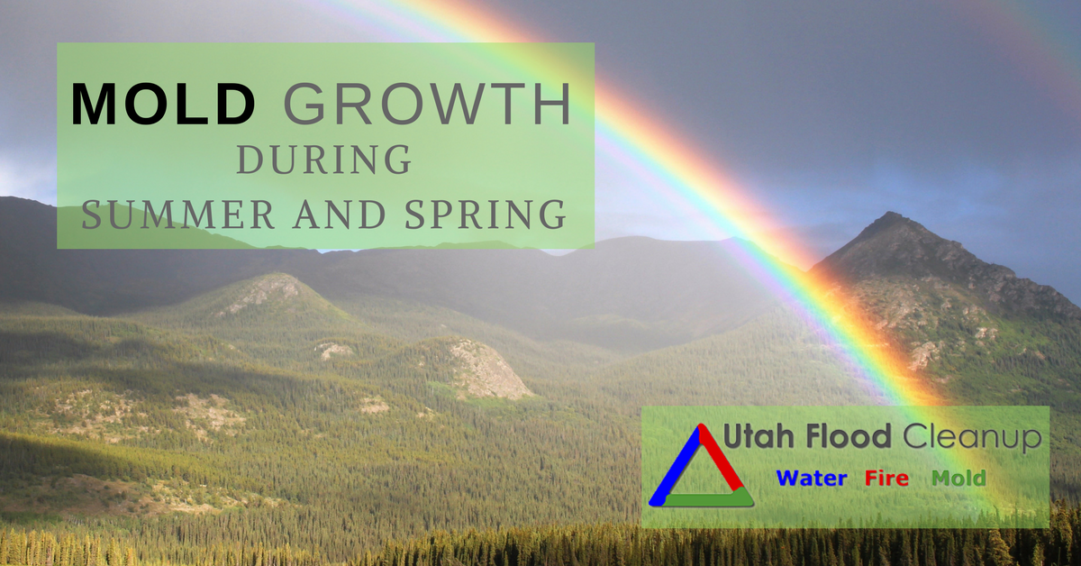 Rainbow in the Mountains - Mold Growth During Summer and Spring