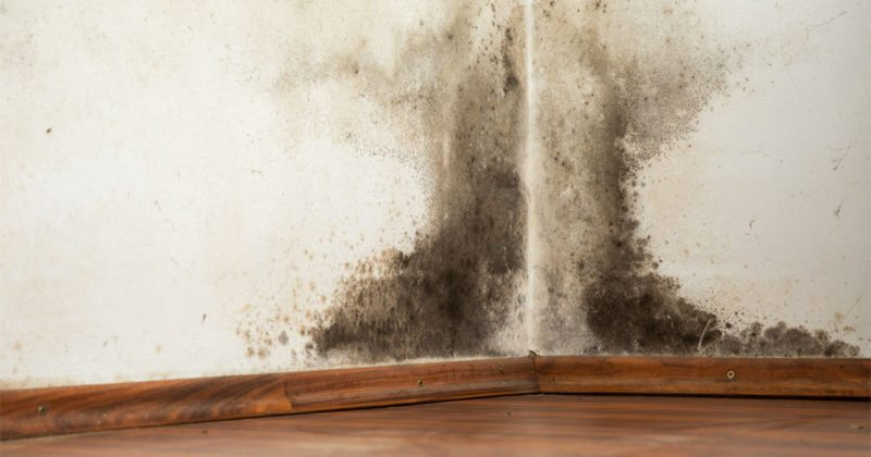 Black Mold Removal in Utah - Utah Flood Cleanup