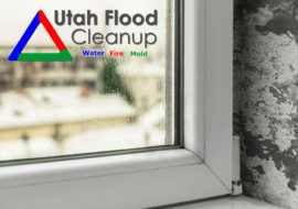 Utah Flood Cleanup How To Identify Mold Image