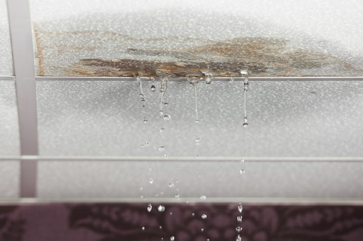 How To Recognize The Signs Of Mold in Utah - Utah Flood Cleanup