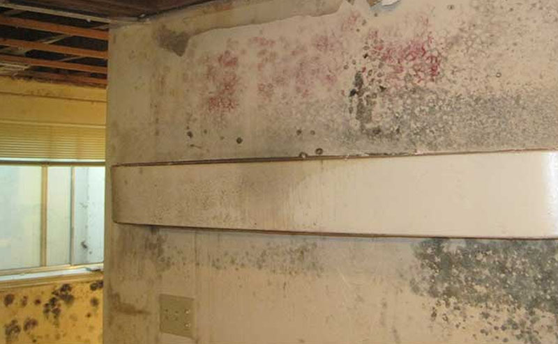 Mold Removal & Abatement Services - Utah Flood Cleanup